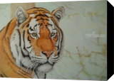 Amur tiger, Drawings / Sketch,Graphic, Realism, Animals,Nature, Painting, By Oleg Kozelskiy