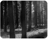 """""""A Forest"""", Photography, Commercial Design, Landscape, Photography: Stretched Canvas Print, By Michael C C Bertsch"""