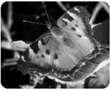 """""""Butterfly Left"""", Photography, Commercial Design, Nature, Photography: Stretched Canvas Print, By Michael C C Bertsch"""
