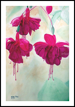 """Fuchsia Dreams"", Paintings, Realism, Botanical, Painting, By William Clark"