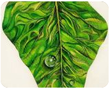 'Leaf' By Georgie Fergusson, Custom Woodwork,Decorative Arts,Land Art,Murals,Paintings,Sculpture, Fine Art,Orphism,Realism, 3-D,Botanical,Decorative,Environmental art,Found Objects,Land Art,Nature, Oil,Wood, By Georgie Fergusson
