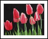 """Nine Sisters"", Paintings, Realism, Botanical, Painting, By William Clark"