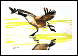 """"""" The Take Off"""", Paintings, Realism, Animals, Watercolor, By William Clark"""
