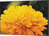 """Yellow Fireworks"", Paintings, Realism, Botanical, Watercolor, By William Clark"