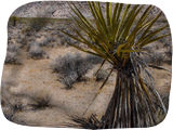 Desert Cactus, Photography, Realism, Landscape, Digital, By Mike DeCesare