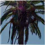 Palm Tree, Photography, Photorealism, Floral, Land Art, Photography: Photographic Print, By Mike DeCesare