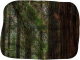 Sol Duc Forest, Photography, Realism, Landscape, Digital, By Mike DeCesare