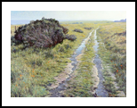 On the Hill, California, Paintings, Impressionism, Botanical, Landscape, Canvas, Oil, By Mason Mansung Kang