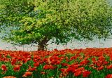 Beautiful Scenery Of Poppy Field, Paintings, Fine Art, Nature, Watercolor, By Angelo