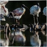 Storks, Illustration, Photorealism, Animals, Photography: Premium Print, By maka magnolia