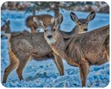 A Curious Gathering Of Deer, Photography, Fine Art, Wildlife, Photography: Stretched Canvas Print, By Jim Stewart