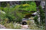 A Wyoming Creek 2, Photography, Fine Art, Nature, Photography: Photographic Print, By Jim Stewart