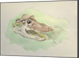 Alligator (Alligator mississippiensis), Paintings, Fine Art, Animals, Watercolor, By Marc Clamage