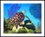 Aloha Honu, Paintings, Surrealism, Animals, Canvas, By Glenn Lathi