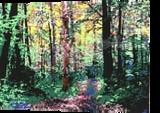 Appalachian Spring, Printmaking, Expressionism, Landscape, Ink, By Thomas J Norulak