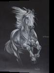 Argento, Drawings / Sketch, Fine Art, Animals, Pastel,Pencil, By Hennie Cloete