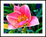 Aroma, Photography, Fine Art, Decorative,Floral, Digital, By Henry Lizarraga