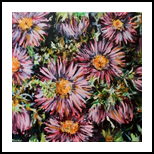 asters, Paintings, Fine Art, Botanical,Floral,Nature, Acrylic,Canvas, By Marta Kuźniar