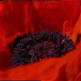 Solid Red Alder Pet Urn