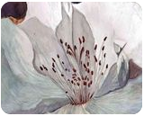 Azalea, Paintings, Realism, Floral, Painting, By William Clark