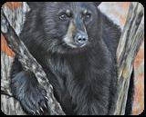 Backyard Visitor, Drawings / Sketch,Paintings, Photorealism,Realism, Animals,Nature,Wildlife, Painting,Pencil, By Carla Kurt
