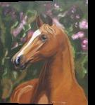 Beautiful horse portrait, Paintings, Realism, Animals, Oil, By Claudia Luethi alias Abdelghafar