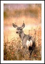 Before the Storm, Digital Art / Computer Art,Photography, Fine Art, Animals,Environmental art,Nature,Wildlife, Digital, By Sandy Richter