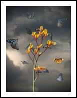 Before the Storm, Digital Art / Computer Art,Photography, Fine Art,Surrealism, Animals,Botanical,Floral,Landscape,Nature, Digital,Photography: Photographic Print, By Jesper Krijgsman