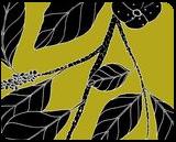 Big Green Plum - Planchonella pohlmaniana var.vestita, Digital Art / Computer Art,Drawings / Sketch,Illustration, Fine Art, Botanical,Environmental art,Nature, Digital,Ink,Mixed,Pencil, By William (Bill) Gregory Ivinson