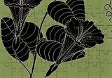 Bush Potato (Also known as Desert Yam)  - Ipomoea costata, Digital Art / Computer Art,Drawings / Sketch,Illustration, Fine Art, Botanical,Environmental art,Nature, Digital,Ink,Mixed,Pencil, By William (Bill) Gregory Ivinson
