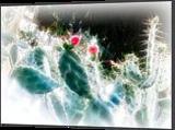 Cactus Flowers, Digital Art / Computer Art, Fine Art, Nature, Digital, By BENARY  IMAGE