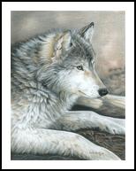 Calm Wolf, Decorative Arts,Drawings / Sketch,Illustration,Paintings, Fine Art,Photorealism,Realism, Animals,Decorative,Environmental art,Nature,Portrait,Wildlife, Painting,Pencil, By Carla Kurt
