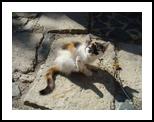 cat, Photography, Realism, Animals, Photography: Photographic Print, By yevgeniya petrenko