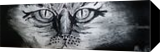 Cat Eyes, Paintings, Fine Art,Minimalism, Animals,Nature, Oil,Painting, By Robert Douglas Given