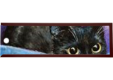 Cat in a box, Paintings, Fine Art, Animals,Decorative,Nature, Acrylic,Canvas, By Marta Kuźniar