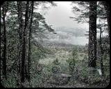 Clouds approaching fantasy forest, Digital Art / Computer Art, Fine Art, Botanical, Digital, By Bernard Harold Curgenven