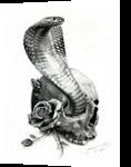 COBRA, Drawings / Sketch,Illustration, Fine Art,Photorealism,Realism, Anatomy,Animals, Pencil, By Miro Gradinscak