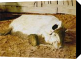 Contentment, Paintings, Realism, Animals, Painting, By William Clark