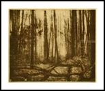 Cook Forest Mist, Printmaking, Existentialism, Landscape, Ink, By Thomas J Norulak