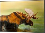 Cooling Off, Paintings, Impressionism, Animals,Nature,Wildlife, Oil, By Dan Twitchell