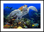 Coral Community, Murals, Photorealism, Animals, Photography: Stretched Canvas Print, By Glenn Lathi