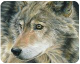 Curious Eyes, Drawings / Sketch,Paintings, Photorealism,Realism, Animals,Nature,Wildlife, Painting, By Carla Kurt