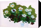 Daisies, Paintings, Expressionism,Fine Art,Impressionism,Modernism,Realism, Animals,Botanical,Decorative,Landscape,Wildlife, Oil, By Marc Clamage
