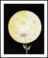 Daisy Moon, Paintings, Modernism, Botanical, Painting, By William Clark
