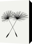 Dandelion Duo, Drawings / Sketch, Expressionism, Floral, Ink, By David Dehner