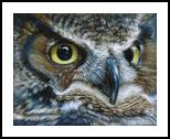 Dark Owl, Drawings / Sketch,Paintings, Photorealism,Realism, Nature,Wildlife, Painting,Pencil, By Carla Kurt