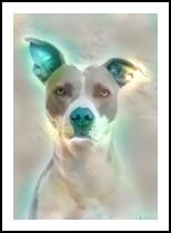 Doggie, Digital Art / Computer Art, Realism, Animals,Figurative, Digital, By Monica Amorim Gutmann