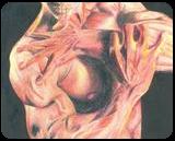 Double face., Drawings / Sketch, Expressionism, Anatomy, Ink, By Alejandro jose maldonado Bendayan