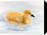 Duckling, Paintings, Realism, Animals, Painting, By William Clark