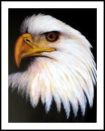 EAGLE, Paintings, Realism, Wildlife, Acrylic, By Jon Quinn